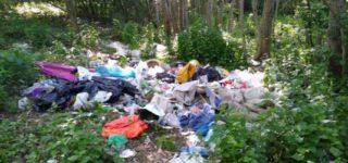 RAPORT: Edukować i karać. Zjawisko zaśmiecania lasów w Polsce